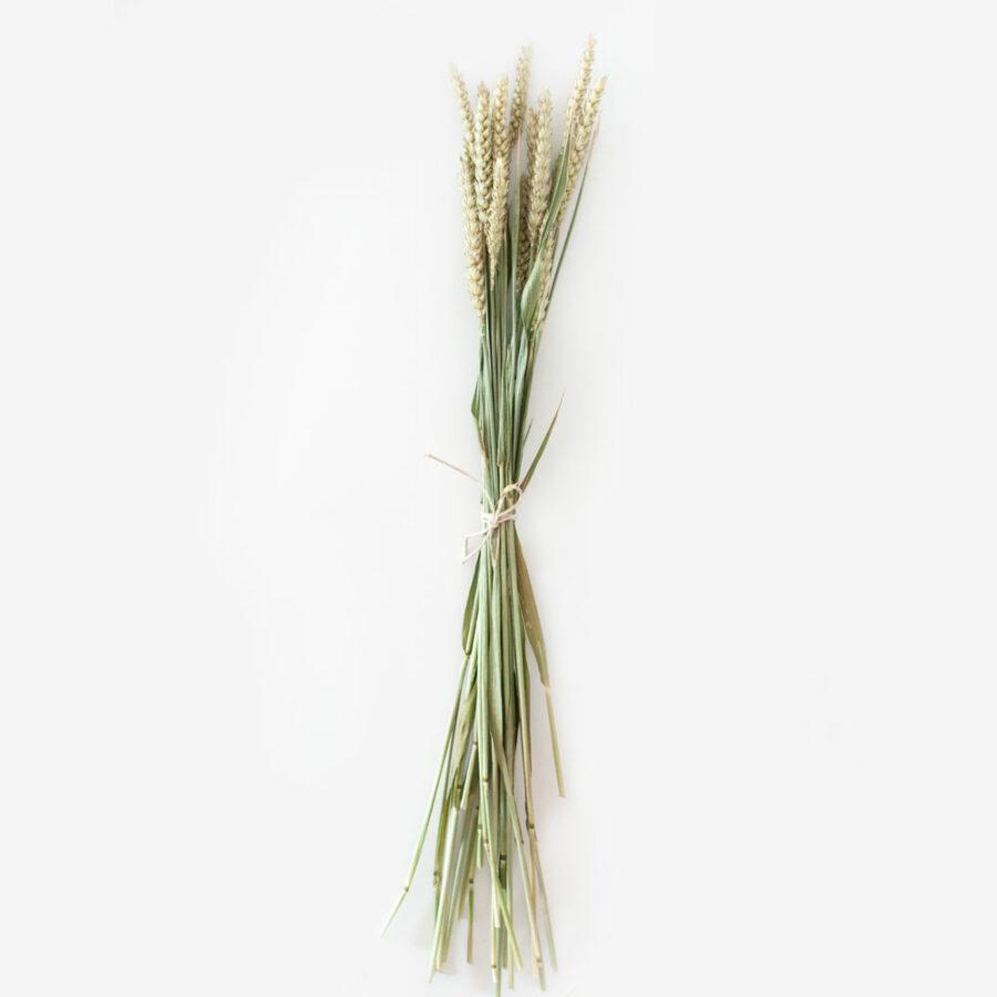 Bund Weizen, getrocknet 2