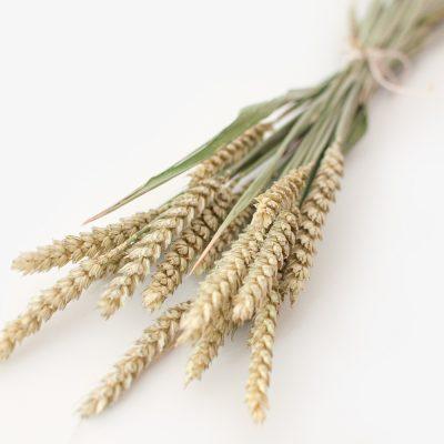 Bund Trockenblumen - Weizen